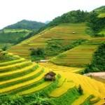 Rice-tarraced-field-TuLe-MuCangChai-YenBai-Asiafrontiertrail